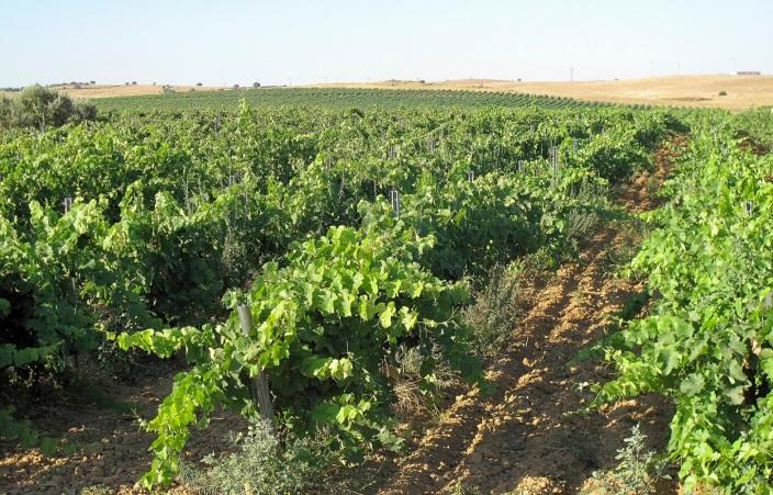 (A-V, Km. 259. Camino de la Coronada. Trujillo. Extremadura